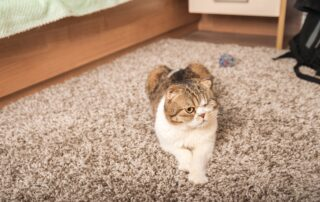 The cat sleeps at home on a gray carpet